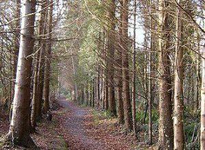 Littlewood Walk Coillte Slane